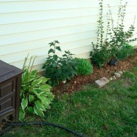 Photo Thumbnail #2: August 2008 Lilac foundation garden in progress...
