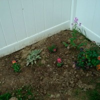 Photo Thumbnail #3: New little side herb garden...first planted...