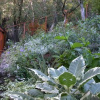 Photo Thumbnail #3: Plantings with Brugmansia 'Sunset' in foreground.