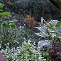 Photo Thumbnail #6: Another view of the plantings.  Many California...
