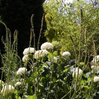 Photo Thumbnail #3: Shades of white with Hydrangea, Francoa, and...