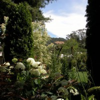 Photo Thumbnail #4: A view to the San Rafael hills through the...