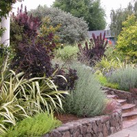 Photo Thumbnail #5: Front entry step planting with Phormium '...