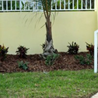 Photo Thumbnail #9: Front wall new plants, crotons for color....