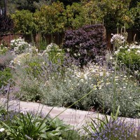 Photo Thumbnail #5: Front entry plantings of lavender, nepeta,...