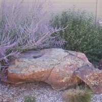 Photo Thumbnail #2: Xeriscape that has not been watered in 2 years.