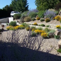 Photo Thumbnail #3: Xeriscape thrives with no water.
