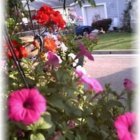 Photo Thumbnail #30: Front yard