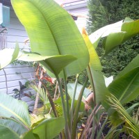 Photo Thumbnail #1: Bird of Paradise