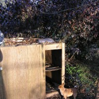 Photo Thumbnail #25: dry food feeding area for cats afraid to enter...