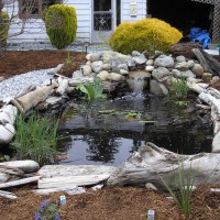 Photo Thumbnail #21: Driftwood to border the pond and hide the liner...