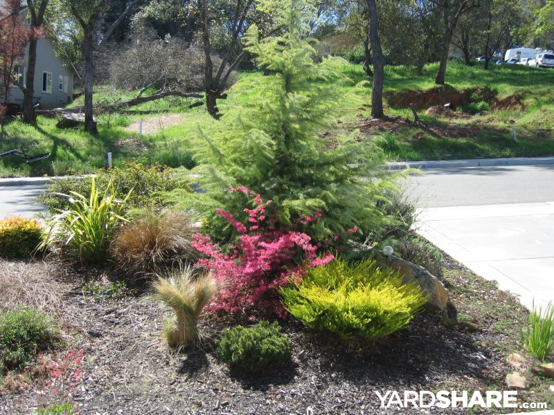 Landscaping ideas spring in the california foothills for No maintenance front yard landscaping