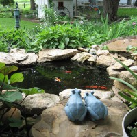 Photo Thumbnail #1: DIY Pond ~900 gallons