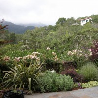 Photo Thumbnail #1: Views of cloud shrouded mountain beyond garden.