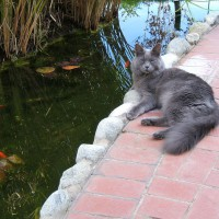 Photo Thumbnail #8: Smokey Joe, guarding his fish.