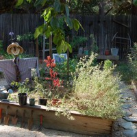 Photo Thumbnail #13: Veggie garden-a challenge with limited sunlight