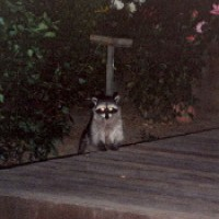 Photo Thumbnail #8: Visitor. This is an old photo, before the deck...