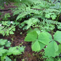 Photo Thumbnail #10: All of the plants in this photo are native to...