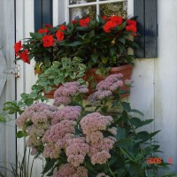 Photo Thumbnail #13: Fall window box