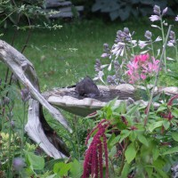 Photo Thumbnail #4: Bird bath surrounded by flowers, with large...