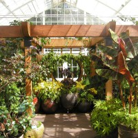 Photo Thumbnail #12: Conservatory of Flowers