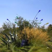 Photo Thumbnail #16: Sierra Azul Nursery Watsonville, CA
