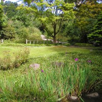 Photo Thumbnail #13: Strybing Arboretum