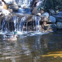 Photo Thumbnail #3: Our water features are approved by nature. Each...