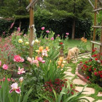 Photo Thumbnail #16: Sam the Dog in the flower garden