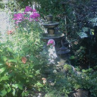 Photo Thumbnail #9: Now have a pair of hummingbirds coming to feast...
