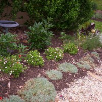 Photo Thumbnail #11: Spring 2008 I added little princes spirea to...