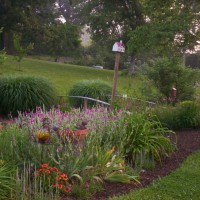 Photo Thumbnail #21: Ditch garden early summer.