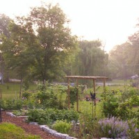Photo Thumbnail #24: Vegetable & Herb gardens. I got tired of...