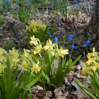 Photo Thumbnail #3: Yellow and blue are a favorite combination of...