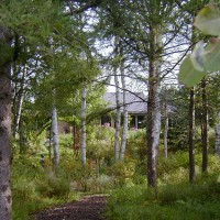 Photo Thumbnail #5: We have quite a few Aspens which we love the...