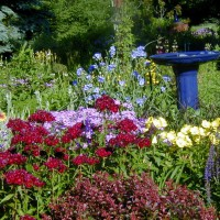 Photo Thumbnail #1: The BLUE ceramic birdbath was my first garden...