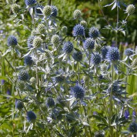 Photo Thumbnail #6: This steel blue Seaholly is a wonderful texture...