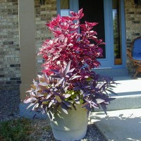 Photo Thumbnail #11: The hot pink plant is something I picked up at...