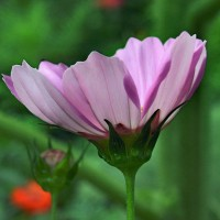 Photo Thumbnail #5: Wild Flower Garden