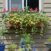 Photo Thumbnail #25: This window box was a first time try for me....