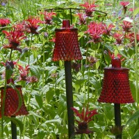 Photo Thumbnail #8: My red votive cups (bellflowers) accent the red...