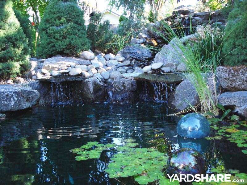Landscaping ideas backyard pond area for Cheap pond ideas