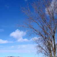 Photo Thumbnail #16: tall tree with the winter sky