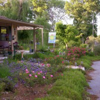 Photo Thumbnail #2: AFTER Front yard early summer 2008. Paved...