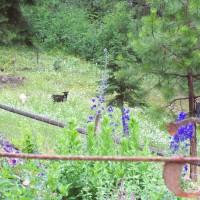 Photo Thumbnail #7: Lambs