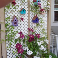 Photo Thumbnail #12: We moved and this is a different garden