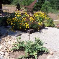 Photo Thumbnail #3: first artichokes