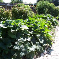 Photo Thumbnail #16: My vegie garden