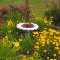 Photo Thumbnail #9: Knockout roses,daylily happy return,coreopsis.