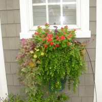 Photo Thumbnail #9: Window box flowers that I change out every summer.